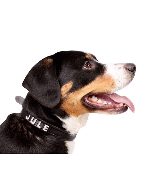 Hondenhalsband voor sierletters