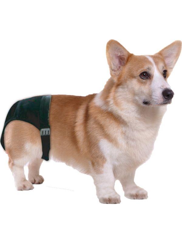 Dog Pant (Loopsheidbroekje) size 4